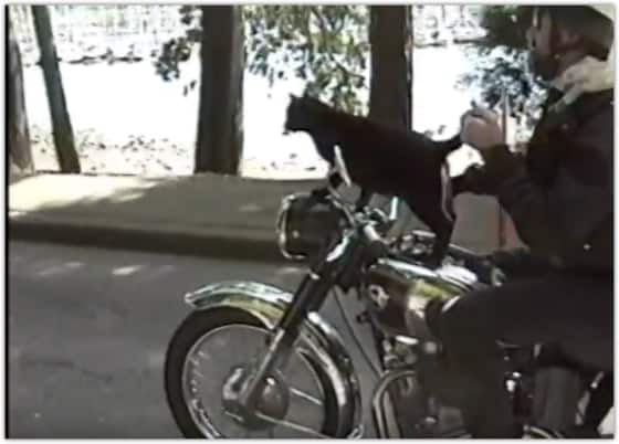 cat riding on a motorcycle