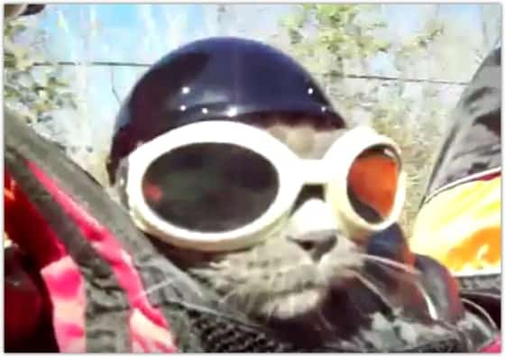 cat with goggles