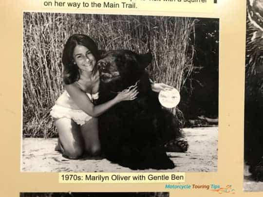 mary oliver and gentle ben the bear